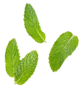 Tazo Website Peppermint Ingredient