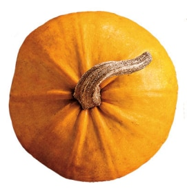 Tazo Website Pumpkin Ingredient