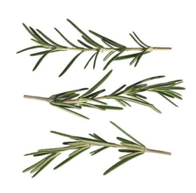 Tazo Website Rosemary Ingredient