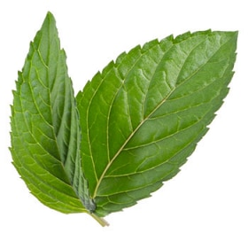 Tazo Website Spearmint Ingredient